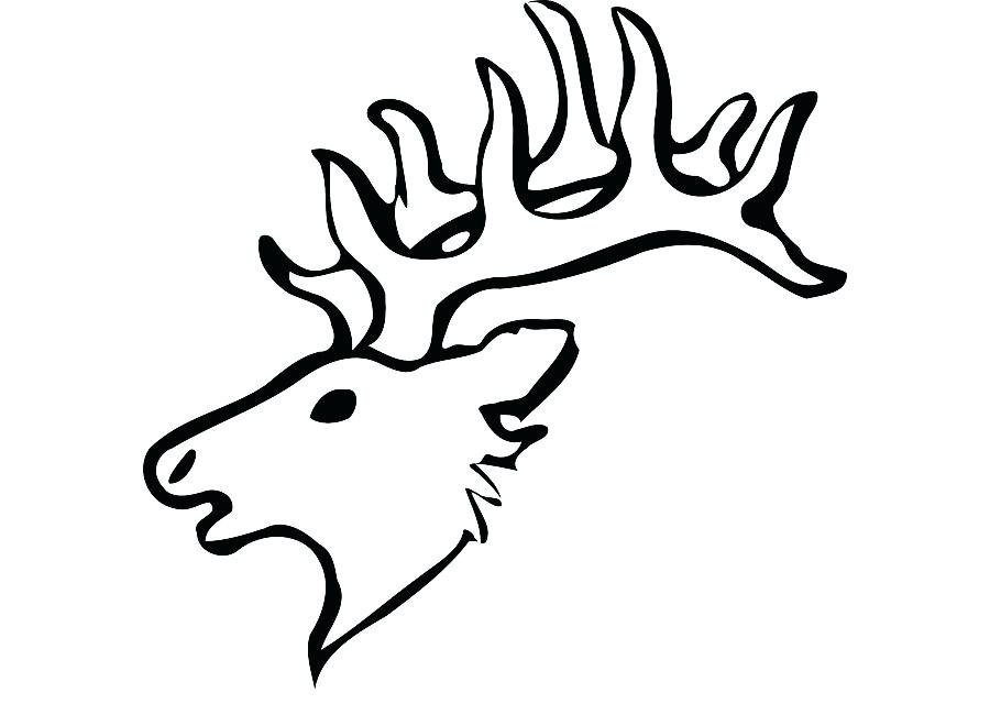 900x640 Drawing Of Reindeer White Tailed Deer Drawing Reindeer Clip Art