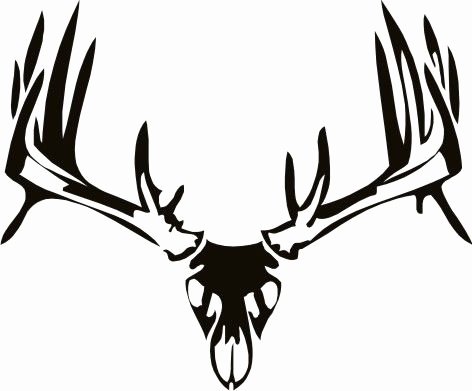 472x391 Fresh Of Whitetail Deer Antlers Clipart