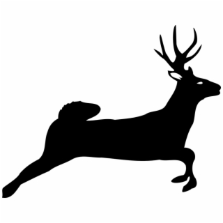 320x320 Hd Fawn Drawing White Tailed Deer