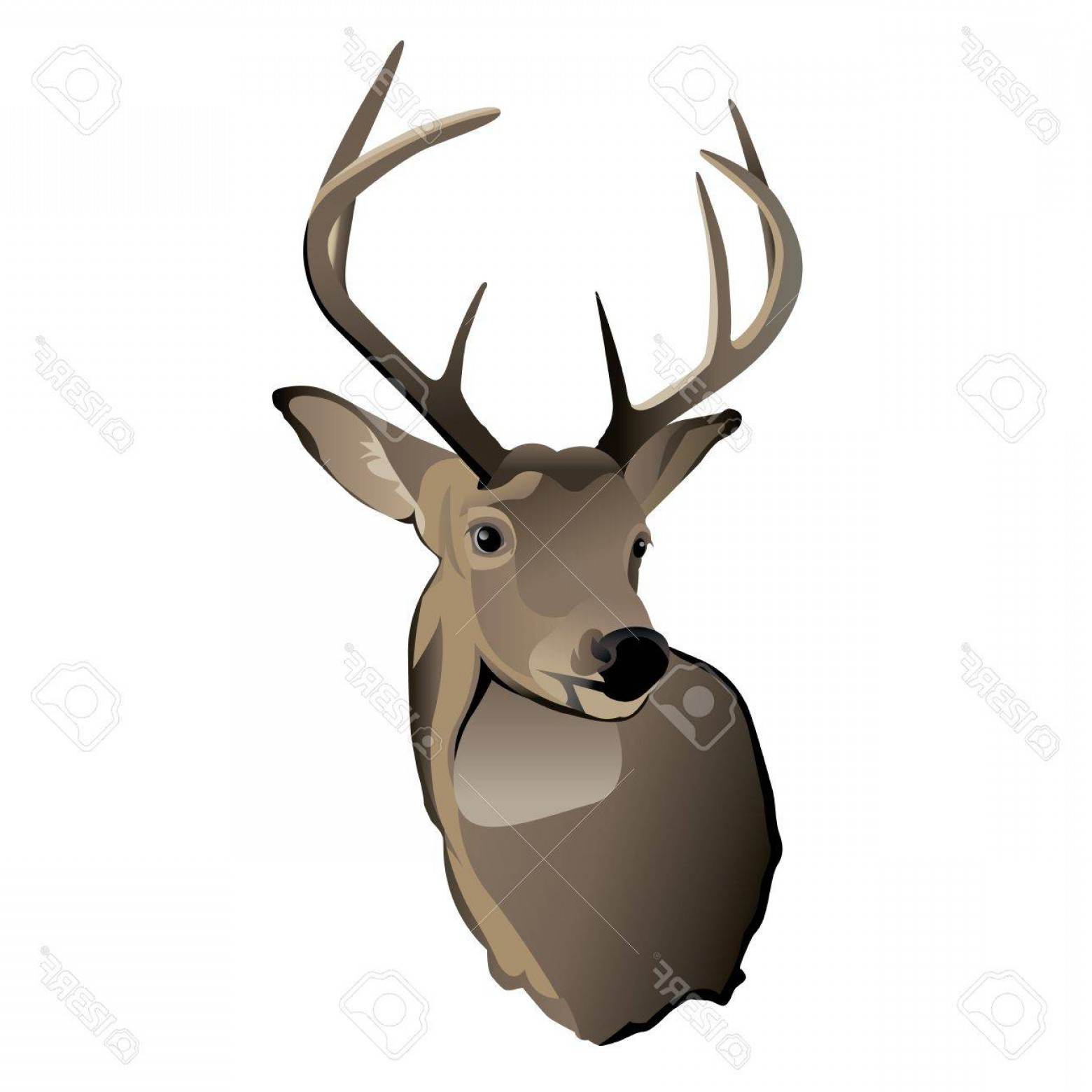 1560x1560 Photoa Shoulder Mount Of A Trophy Whitetailed Deer Buck Lazttweet