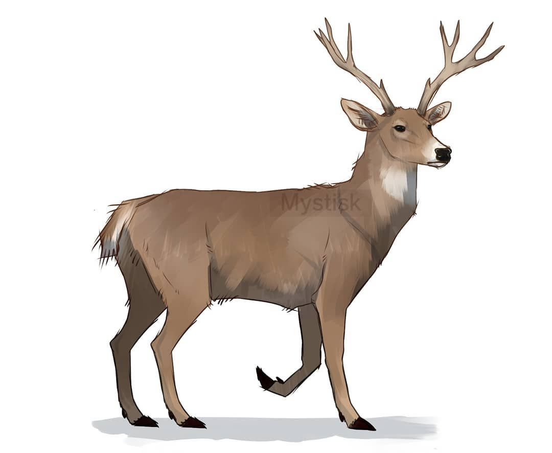 1080x886 White Tailed Deer, Because Why Not