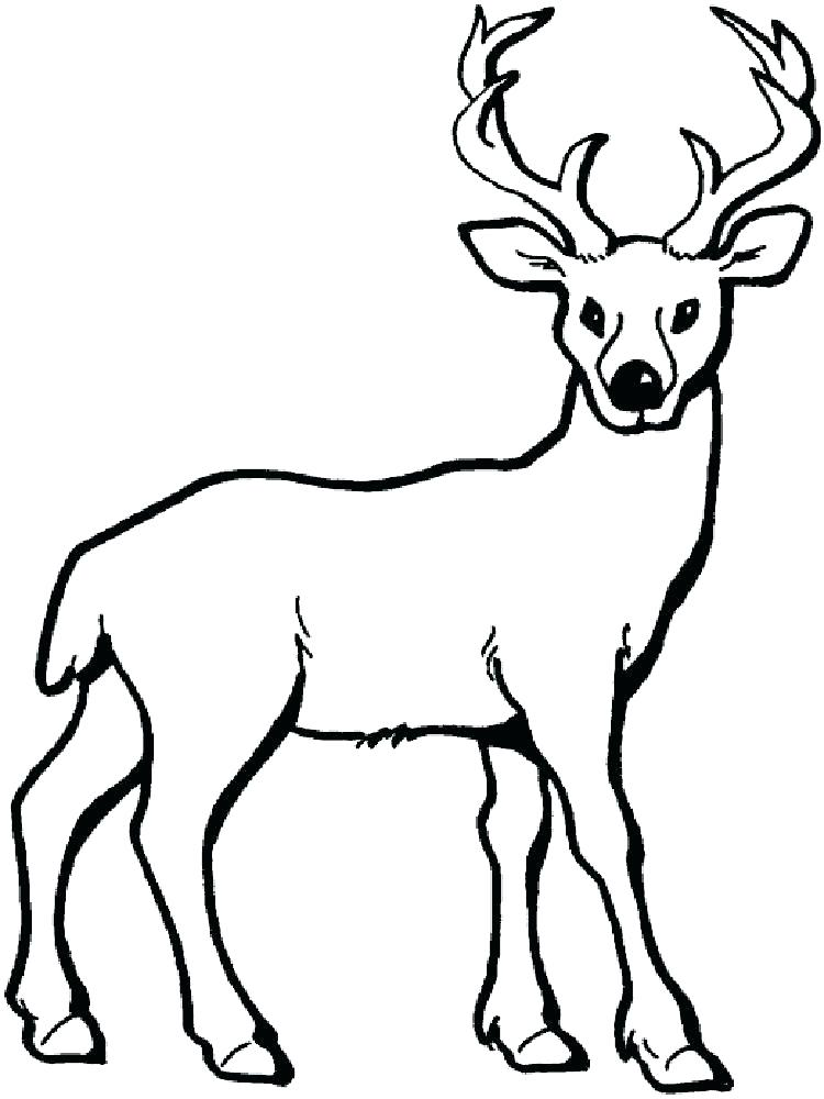 750x1000 White Tailed Deer Coloring Pages To Print Head Whitetail Animal
