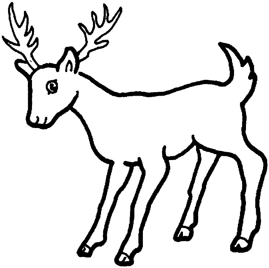 900x896 White Tailed Deer Drawing