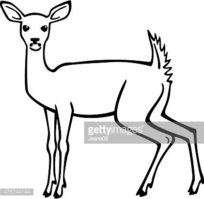 421x410 White Tailed Deer Premium Clipart