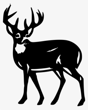 300x372 Whitetail Deer Png, Free Hd Whitetail Deer Transparent Image