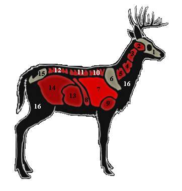 362x380 Collection Of Free Buck Drawing White Tailed Deer Download On Ui Ex