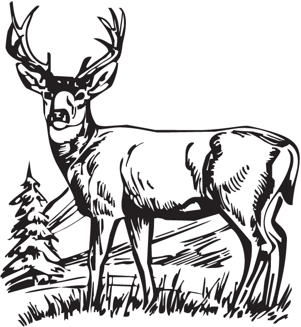 600x653 Deer, Hunting, Drawing, Transparent Png Image Clipart Free Download