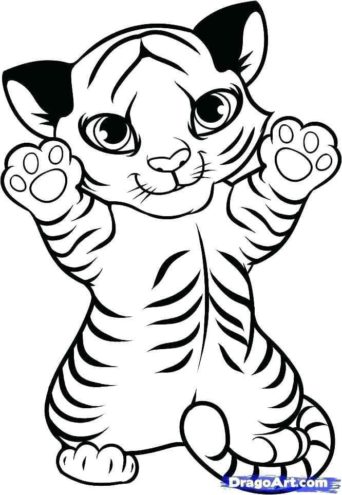 666x964 easy to draw tigers draw tiger easy draw tigers