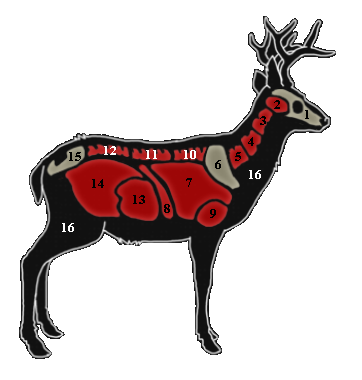 362x380 Hunting Drawing Whitetail Deer Huge Freebie! Download