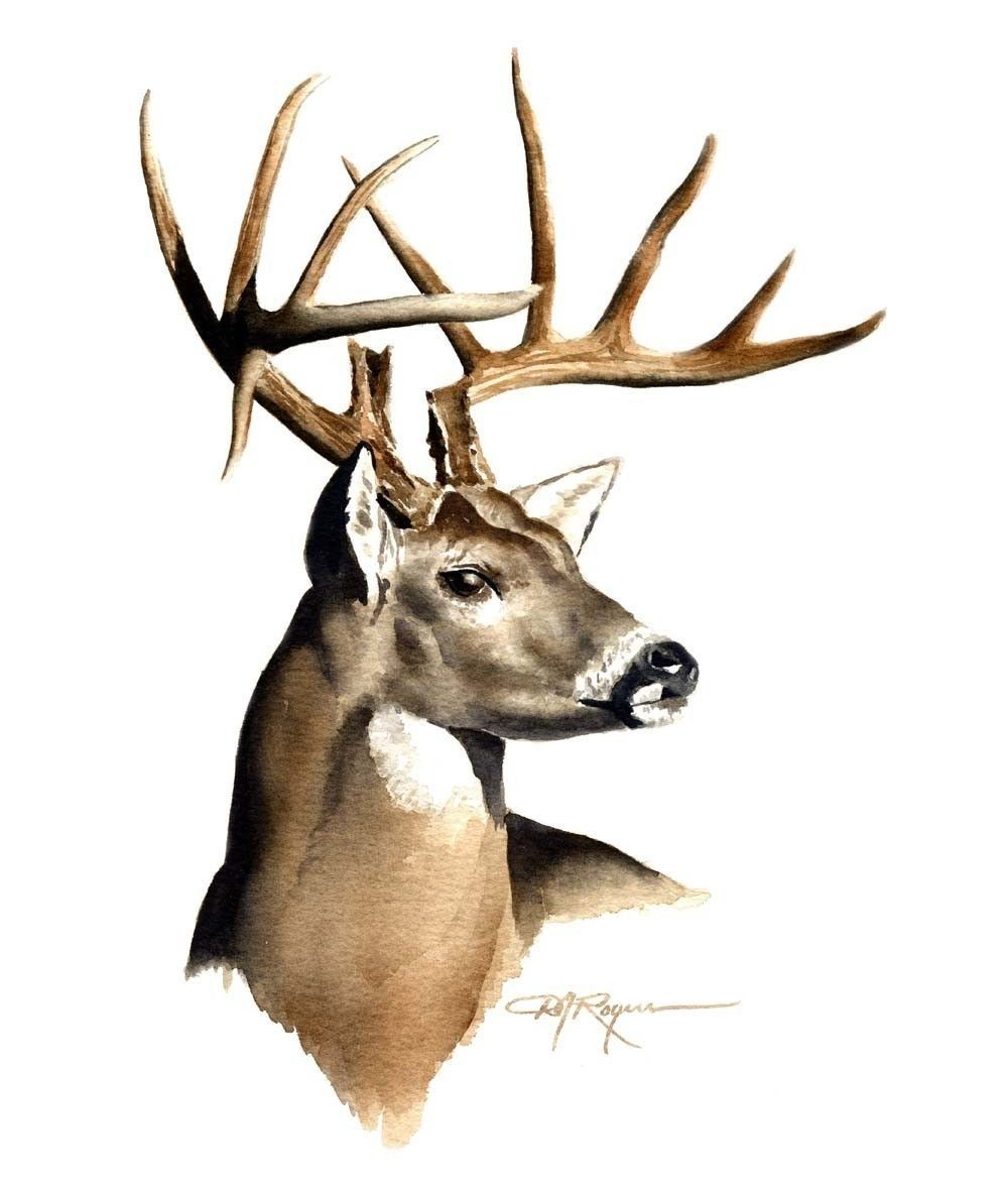 1000x1178 Art Deer, Deer Sketch, Deer Art