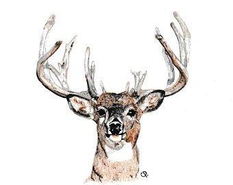 340x270 Watercolor Buck Etsy