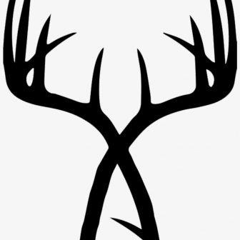 336x336 Whitetail Antler Caribou Drawing Shed Buck Flowers Deer Iydunetwork