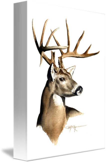 425x650 Whitetail Buck