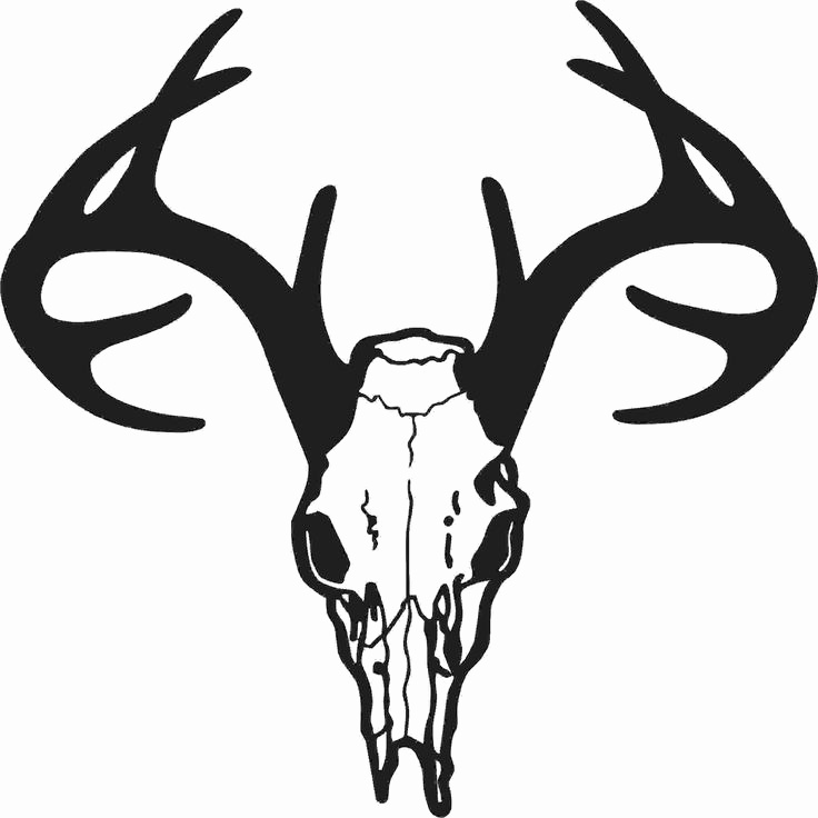 736x736 Whitetail Deer Antlers Clipart Best Of Hotmeini Buck Skull Decal