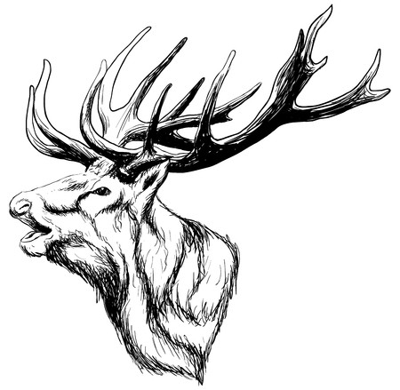 450x439 Whitetail Deer Head Royalty Free Vector Graphics