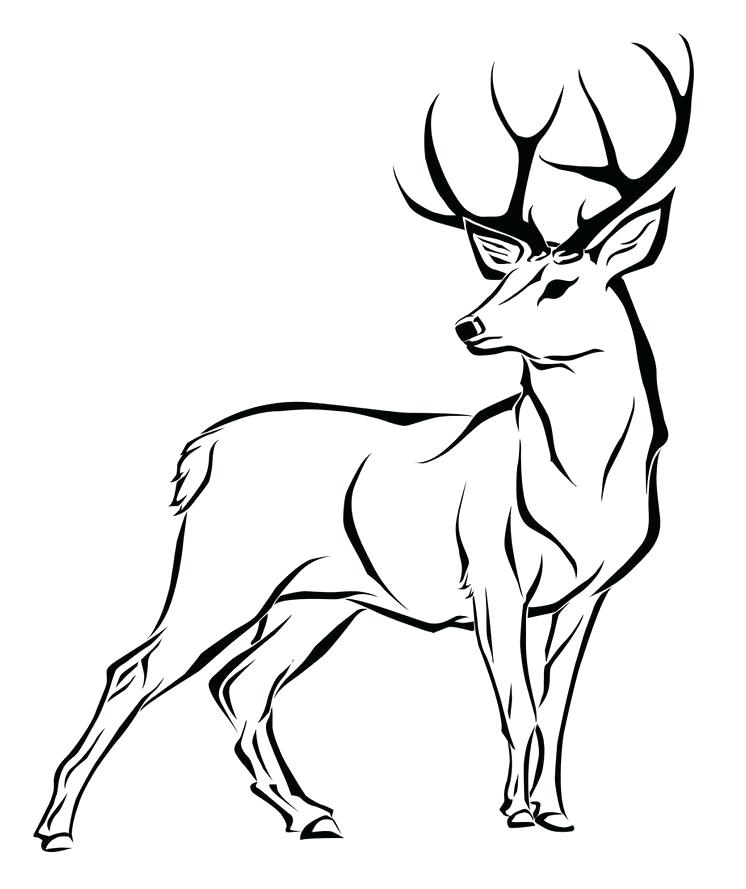 746x889 Deer Coloring Pages Baby Deer Coloring Pages Realistic Whitetail
