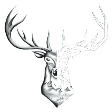 375x375 Deer Picture Drawing Deer Drawing Deer Head Drawing Picture Nip