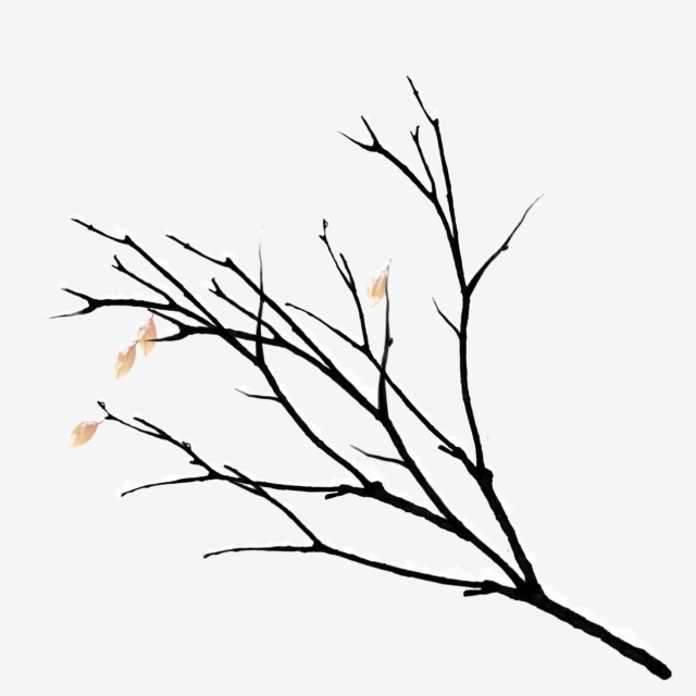 640x640 snow covered branches, winter tree branches, snow, branches png