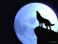 236x177 Best Wolf Howling