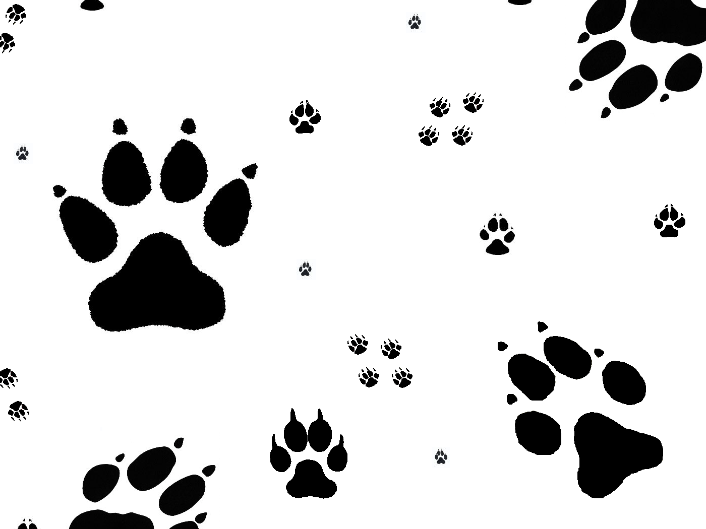 1400x1050 Drawing Wolf Paw Print Circle