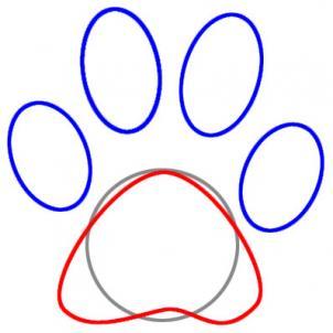 302x302 Draw A Paw Print, Step