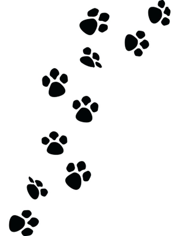 640x787 How To Draw A Panther Paw