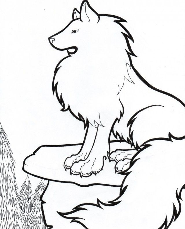640x790 arctic wolf drawing clipart best arctic wolf coloring pages