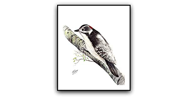 600x350 Downey Woodpecker Drawing Print X Handmade