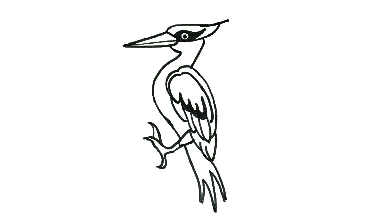 1280x720 How To Draw A Woodpecker How To Draw Birds Drawing Easy Step