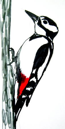 228x450 How To Draw A Woodpecker