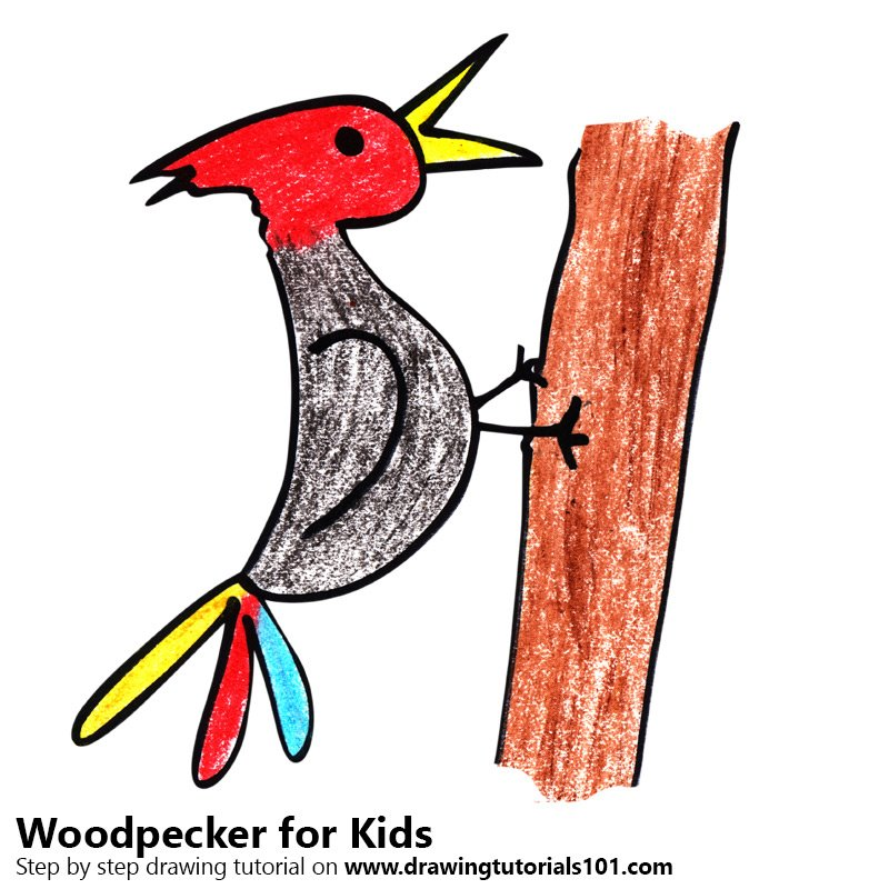 800x800 Learn How To Draw A Woodpecker For Kids