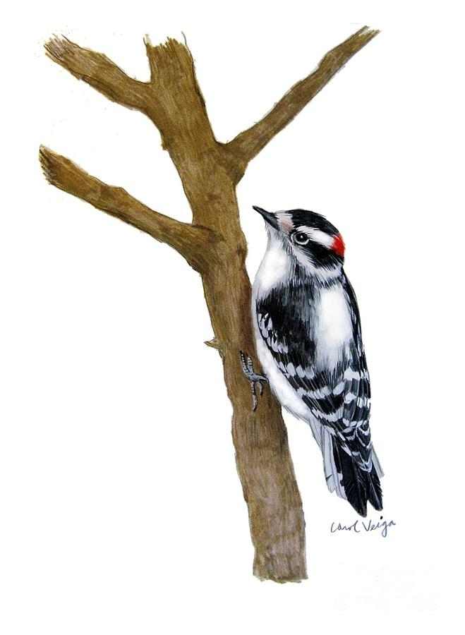 659x900 Downy Woodpecker Drawing