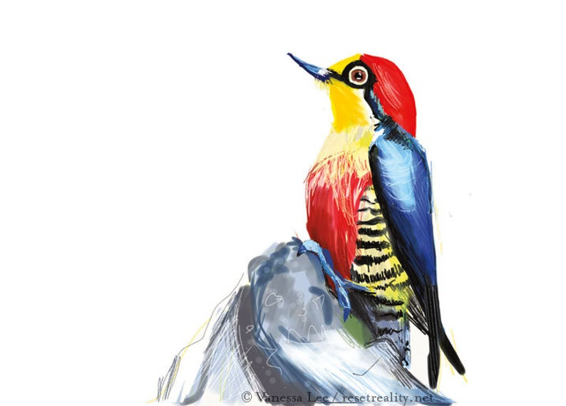 794x570 Yellow Fronted Woodpecker Bird Digital Drawing Print Original Etsy