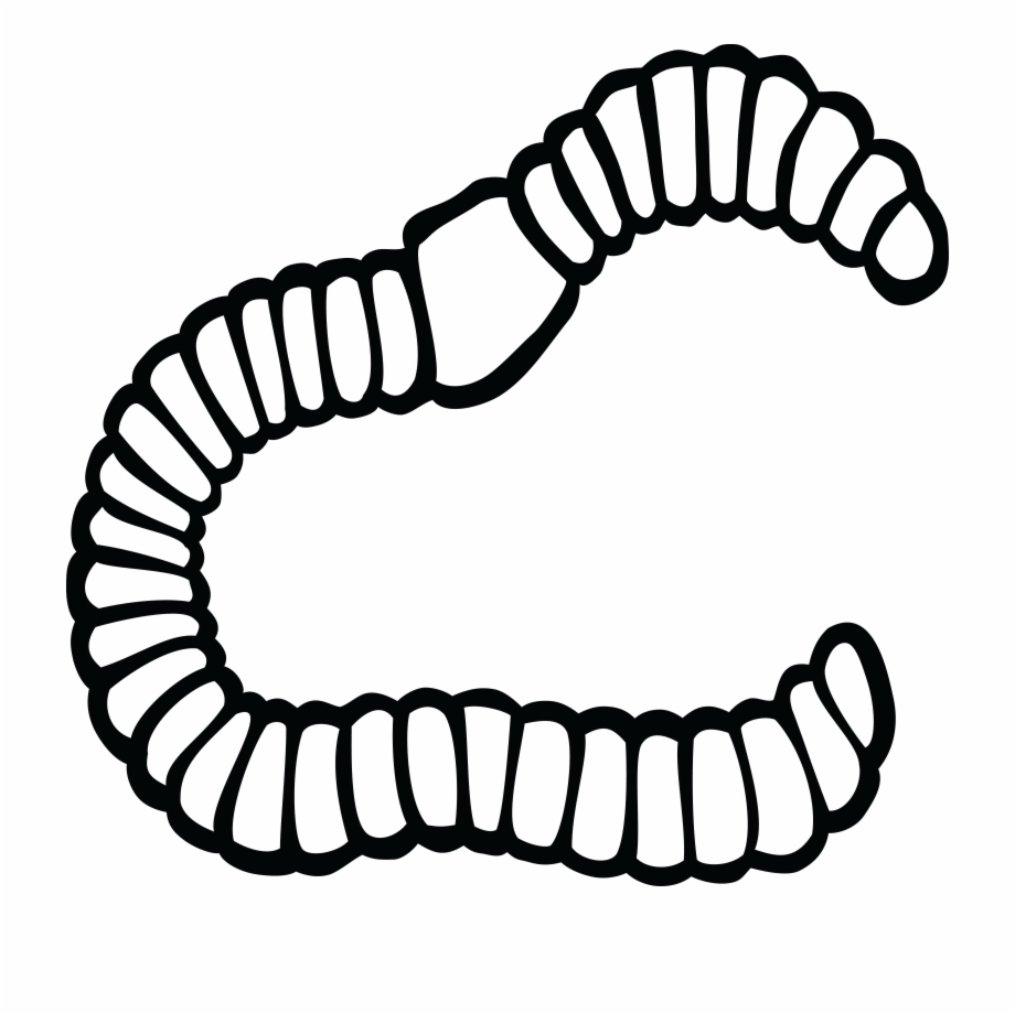 920x919 Earthworm Black And White Drawing