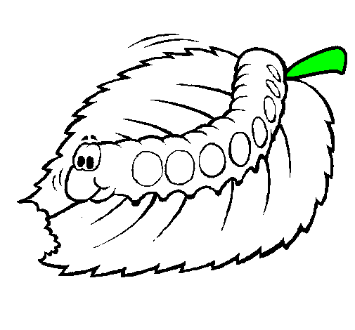 505x470 Butterfly, Worm, Drawing, Transparent Png Image Clipart Free