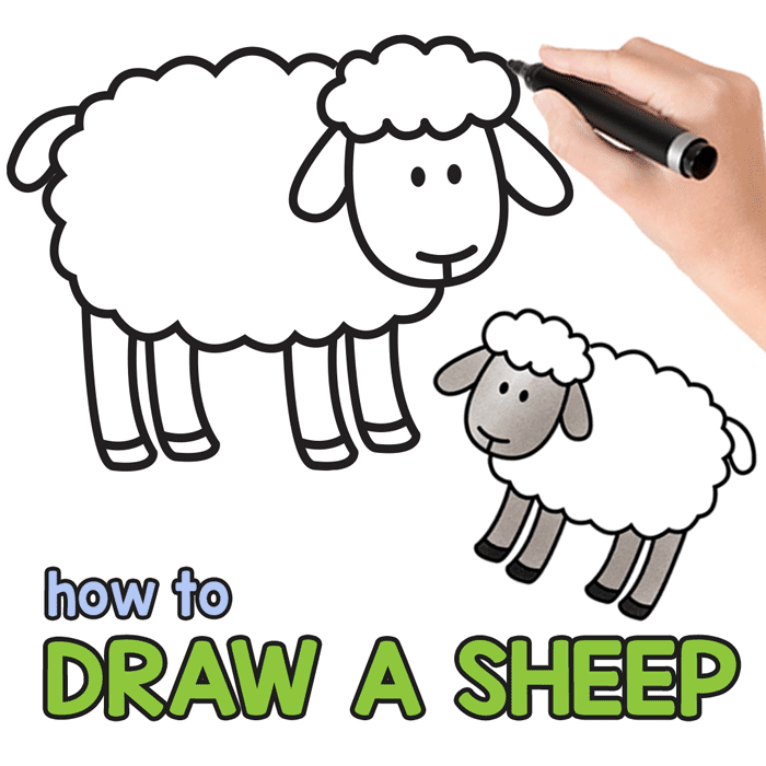 700x700 How To Draw A Sheep
