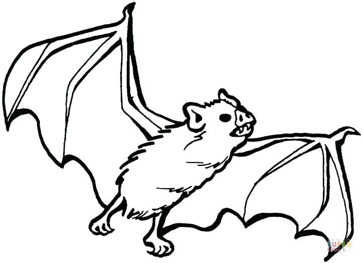 720x523 Vampire Bat Drawing