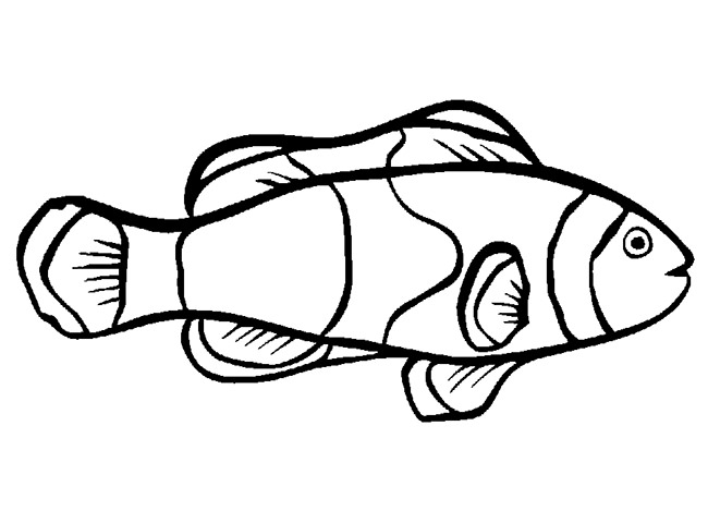 650x469 fish templates free premium templates