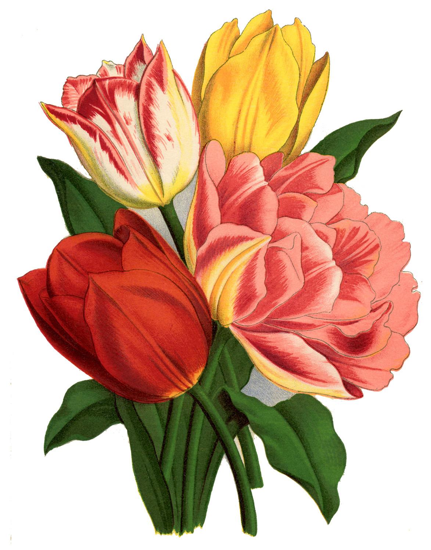 Yellow Tulip Drawing