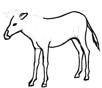 347x300 How To Draw A Zebra