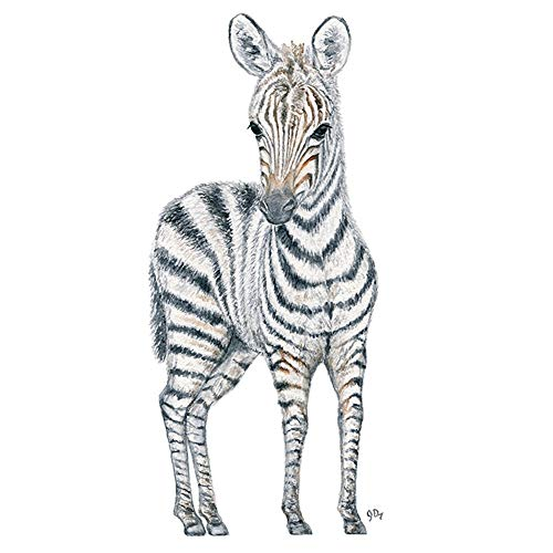 500x500 Huge Collection Of 'baby Zebra Drawing' Download More Than