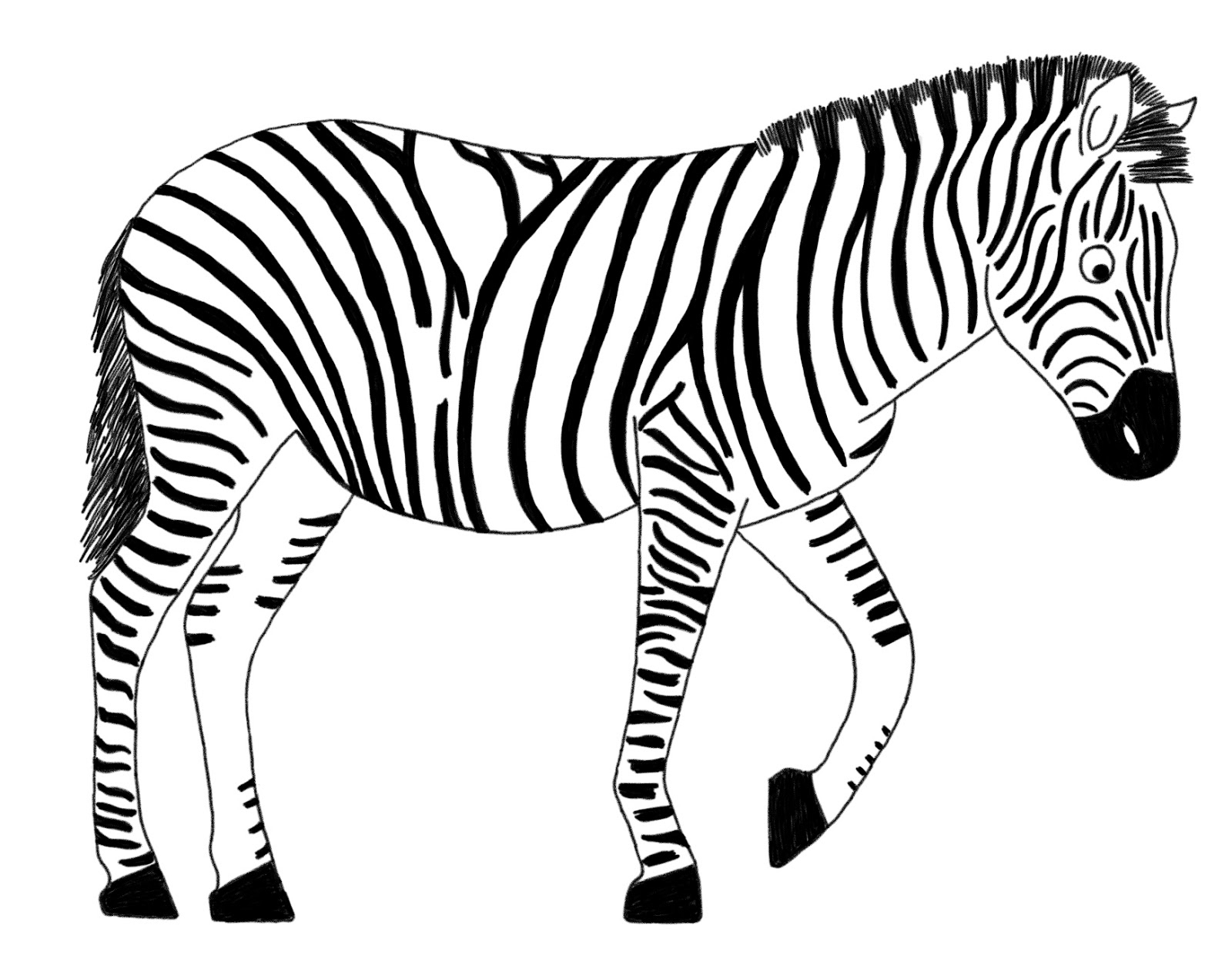 1600x1258 Gorgeous Zebra Drawing For Kids Gallery