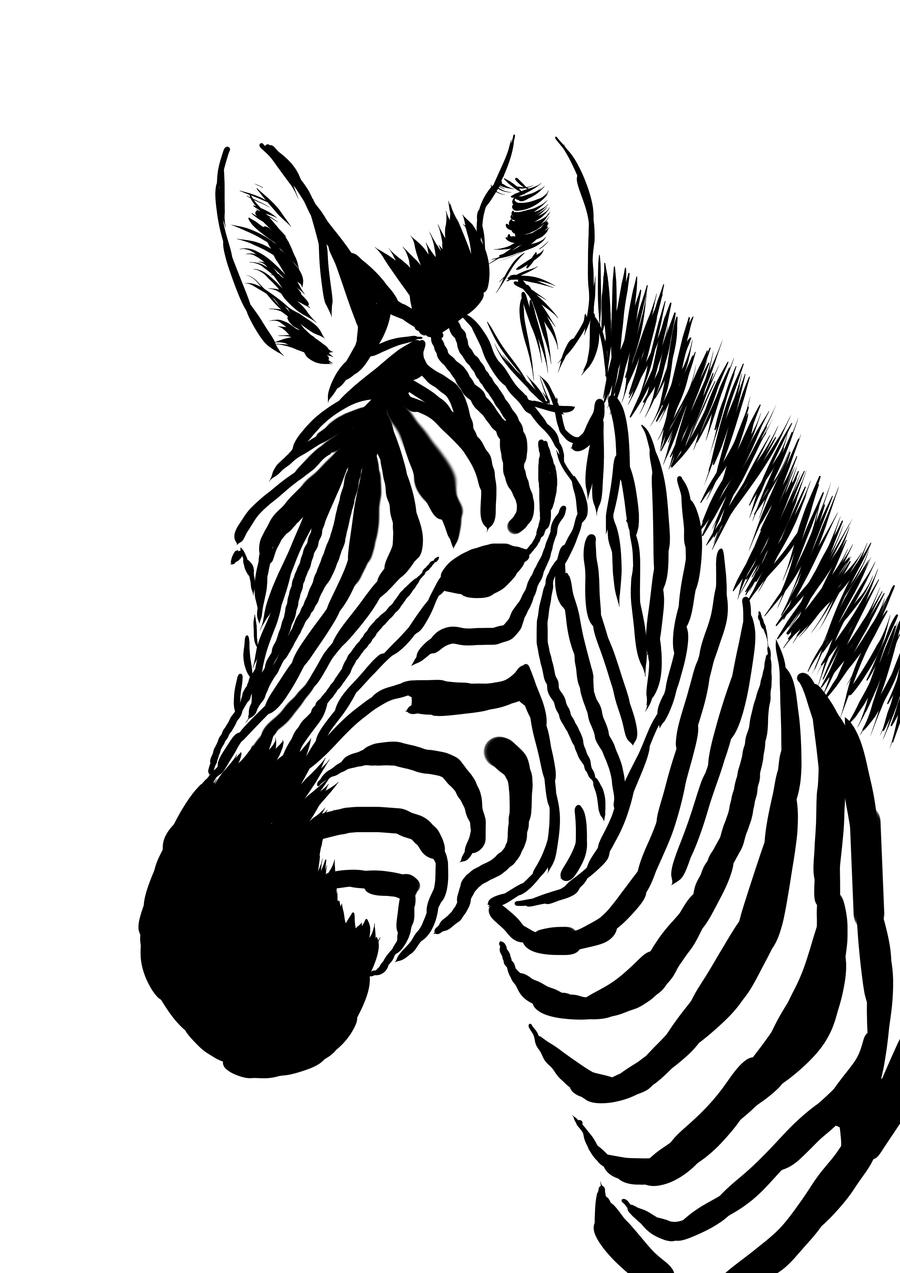 900x1273 Zebra In Line Drawing