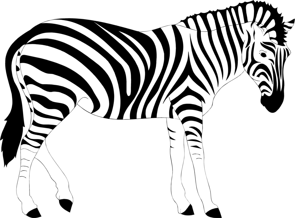 1016x750 Zebra Lion Stripe Drawing Computer Icons Cc0