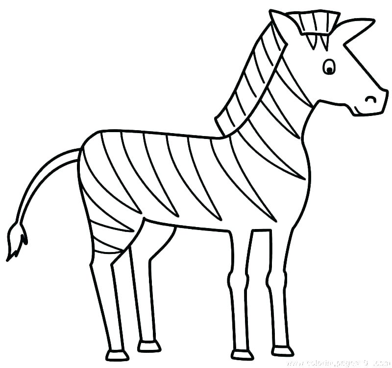 800x752 Printable Zebra Pictures Zebra Printable Coloring Pages Coloring