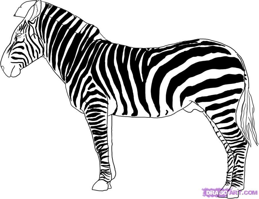 900x692 Draw A Zebra, Step
