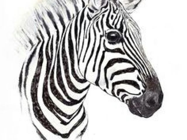 640x480 Drawing Zebra Step