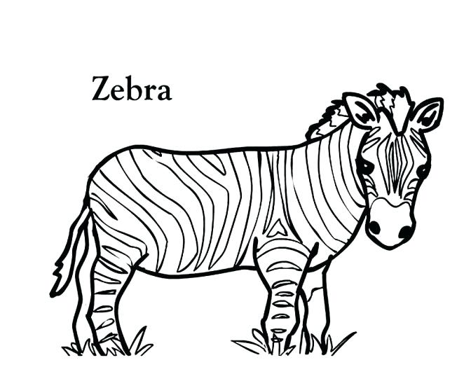 672x554 zebra coloring fabulous zebra coloring sheet zebra coloring sheet