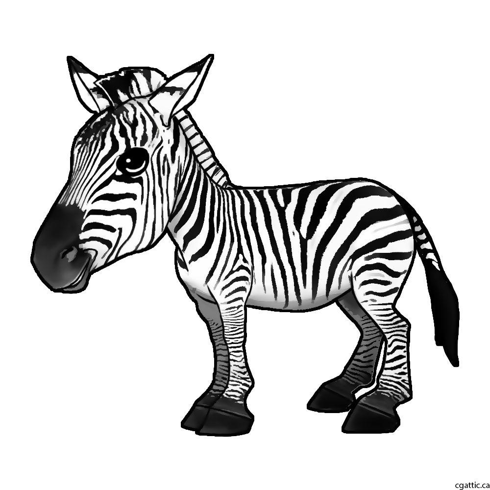 Zebra Drawing Step By Step