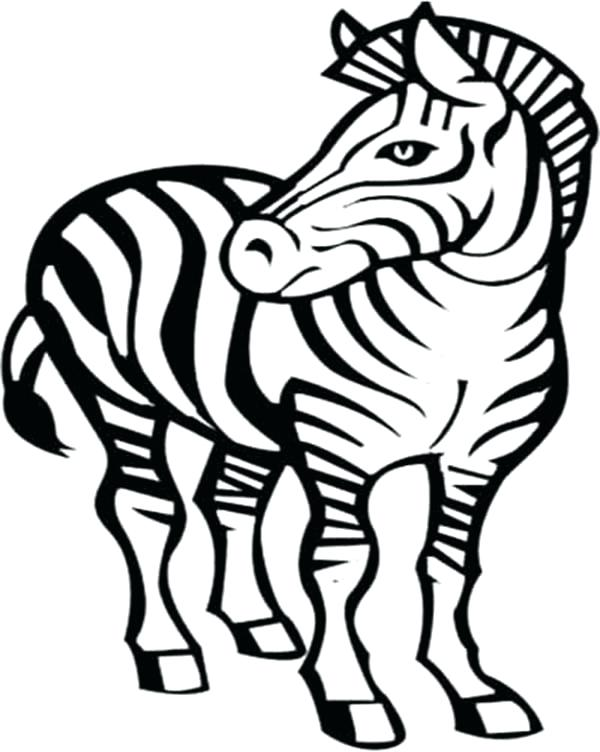 600x752 how to draw a zebra how to draw a zebra head draw zebra easy nip